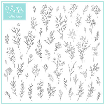 Hand Drawn Botanical Flowers. Set of plant elements. Vector Collection of Illustrations. Hand sketched vector vintage elements (leaves and flowers). Wedding decorations