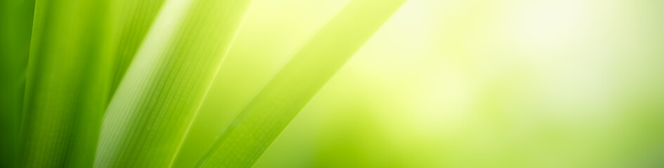 Foto auf Acrylglas Gelb Schwefelsäure Closeup nature view of green leaf on blurred greenery background in garden with copy space for text using as summer background natural green plants landscape, ecology, fresh cover page concept.