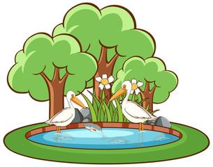 In de dag Kids Pelican birds on white background