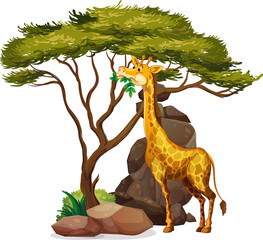 Poster Kids Isolated picture of giraffe under the tree