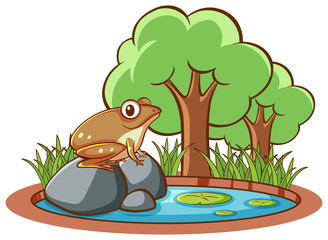 Photo sur Aluminium Jeunes enfants Isolated picture of frog in garden