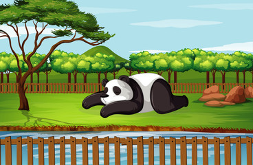 Scene with panda in garden