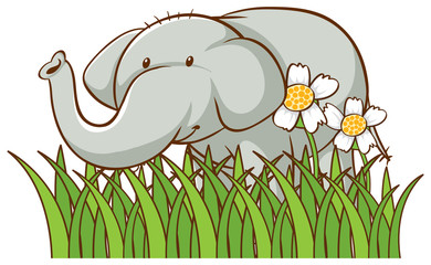 Poster Kids Isolated picture of cute elephant