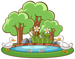 Ducks in the pond on white background