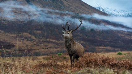 Wall Mural - Monarch Of The Glen