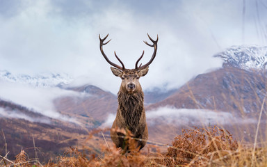 Foto op Textielframe Hert Monarch Of The Glen