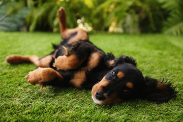 Cute dog relaxing on grass outdoors. Friendly pet