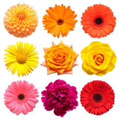 Flowers head collection of beautiful daisy, rose, calendula, gerbera, chrysanthemum, dahlia, peony isolated on white background. Card. Easter. Spring time set. Flat lay, top view