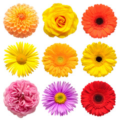 Flowers head collection of beautiful aster, rose, daisy, gerbera, chrysanthemum, dahlia, chamomile isolated on white background. Card. Easter. Spring time set. Flat lay, top view