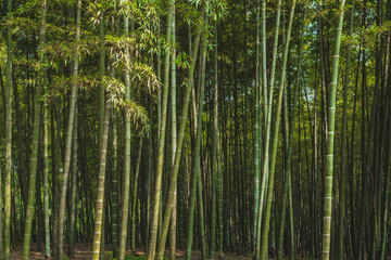 Printed roller blinds Bamboo Bamboo forest in park near West Lake, Hangzhou, China