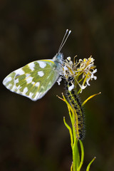 Photo sur Aluminium Papillon Closeup beautiful butterflies sitting on the flower.