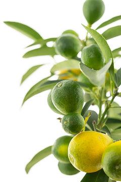 fresh vegetable citrus green fruit ripe yellow on white isolated background