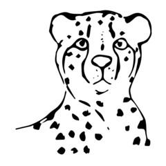 Cute cheetah. Sketch. Vector illustration. Drawing a line.