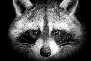 Fotobehang Panda raccoon on a background