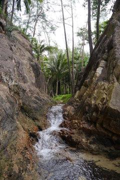 Klamm mit Bach in den Tropen mit Palmen und Felsen