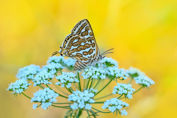 Aluminium Prints Butterfly Beautiful butterfly sitting on flower in a summer garden