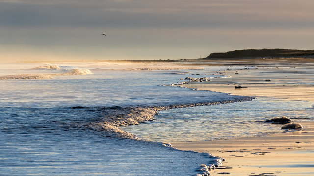 Seagull flying over Brora beach bathed in soft golden winter evening light and with surf rolling in from the ocean