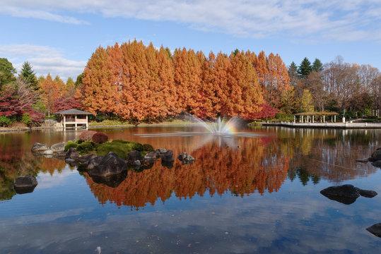 晩秋の栃木県中央公園(栃木県宇都宮市睦町)