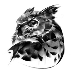 drawn portrait of an owl bird on a white background