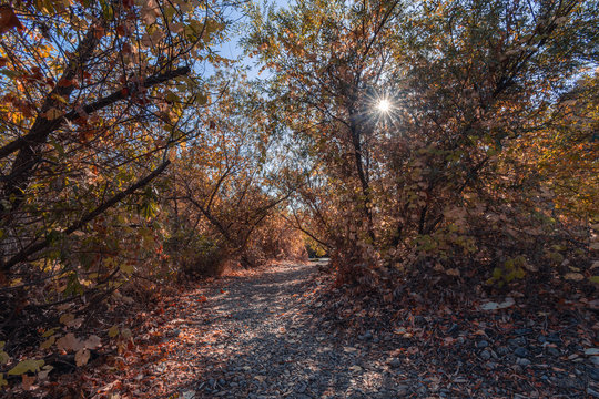 A path winding through a forest in autumn