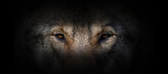 Deurstickers Panter Wolf portrait on a black background