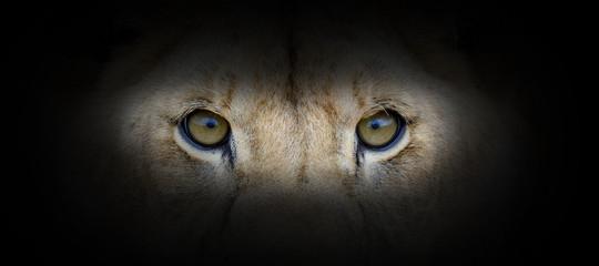 Photo sur Aluminium Pays d Afrique Lion portrait on a black background