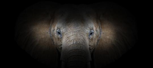 Deurstickers Panter Elephant portrait on a black background