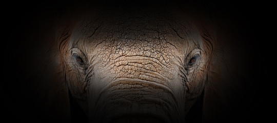 Foto auf AluDibond Individuell Elephant portrait on a black background