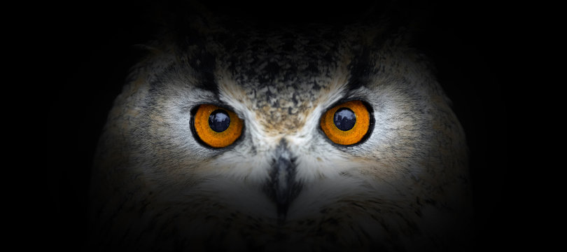 Owl portrait on a black background