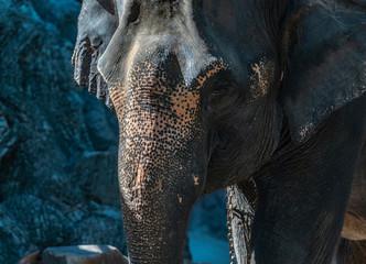 Foto op Aluminium Olifant face of elephant
