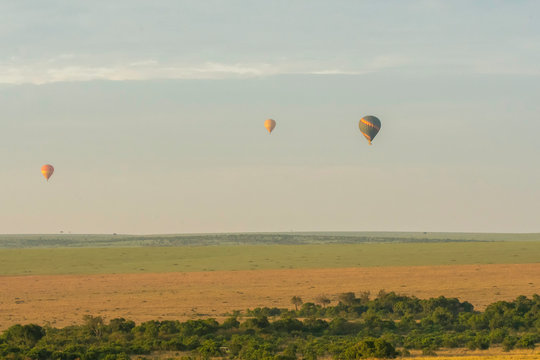 Hot air balloons raising from the ground in the plains of Masai Mara National Reserve for an early morning safari ride
