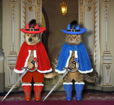 The dog and the cat dressed in musketeer costume with swords is standing in the old castle.