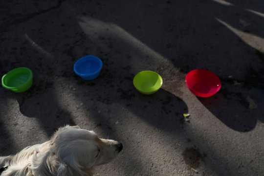 """Dog waits for the start of the """"Sanperrestre"""" walk to raise awareness about the need to adopt dogs and cats instead of purchasing them, in Madrid"""
