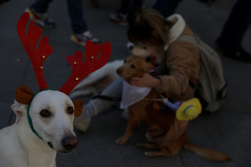 "Dogs in costumes wait for the start of the ""Sanperrestre"" walk to raise awareness about the need to adopt dogs and cats instead of purchasing them, in Madrid"