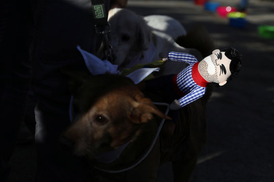 """Dogs in costumes take part in the """"Sanperrestre"""" walk to raise awareness about the need to adopt dogs and cats instead of purchasing them, in Madrid"""