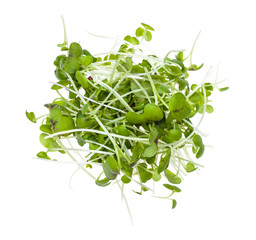 top view of pile from fresh mustard cress isolated