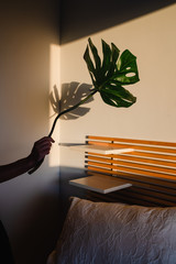 anonymous woman holding a palm tree leaf and playing with the light