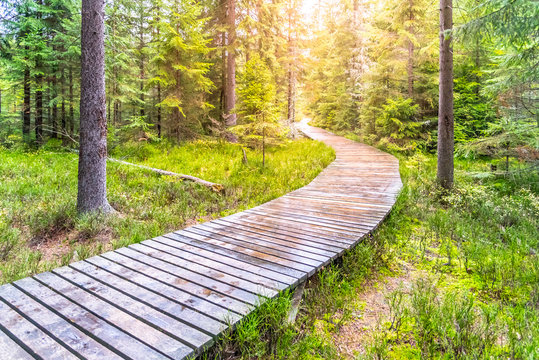 Autumn forest walk. Touristic wooden plank path