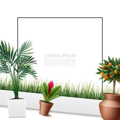 Wall Mural - Beautiful Home Plants Colorful Template