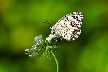 Photo sur Aluminium Papillon Closeup beautiful butterfly sitting on the flower.