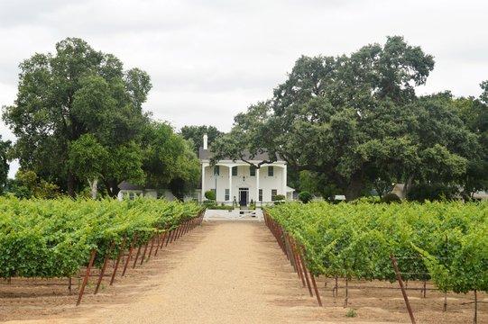 Winery in Lodi, California