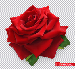 Red Rose. 3d realistic vector object