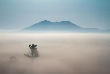 Aluminium Prints Dark grey tree in fog mountains