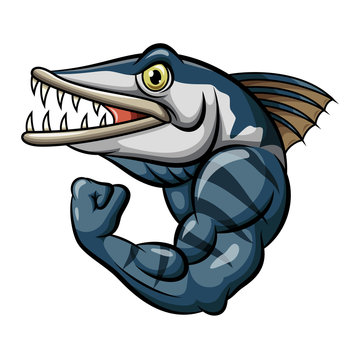 Cartoon strong angry barracuda fish mascot