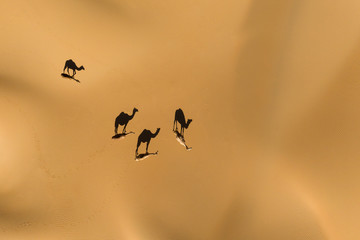 Photo sur Aluminium Abou Dabi Aerial view from a drone of shadows of a group of dromedary camels walking in the Empty Quarters desert. Abu Dhabi, United Arab Emirates.