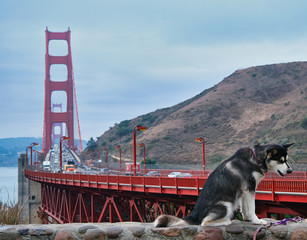 Fotomurales - Dog by Golden Gate Bridge on a Stone Wall
