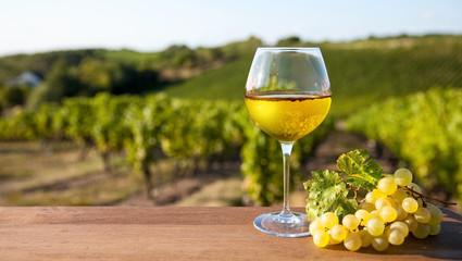 Obraz Verre de vin blanc et vignoble en France. - fototapety do salonu