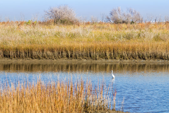 Wetlands and Grasslands of Galveston Island State Park with Snowy Egret in Marsh Pool