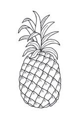 pineapple fruit. eps10 vector stock illustration. hand drawing. art line
