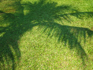 Wall Mural - shadow of palm tree leaves on green grass background.